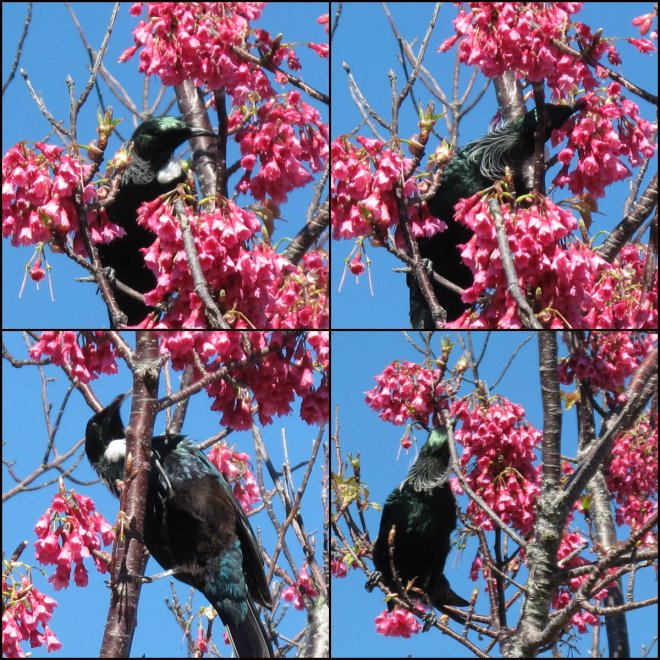 Tui Collage